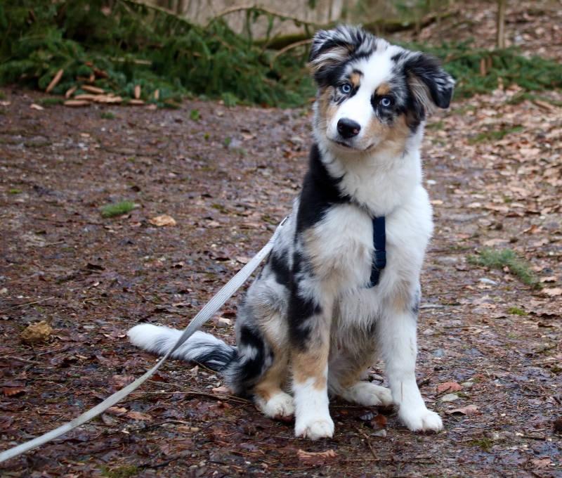 Balu der Hund von Ramona Nicklaus-Monatsrückblick April